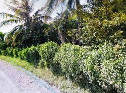 ขายที่ดิน 36 -3 - 80 ไร่ มีสวนผสมทุเรียน มังคุด  ต.ทับไทร อ.โป่งน้ำร้อน จันทบุรี
