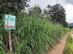 ขาย ที่ดินสวนยางพารา บนเนินน้ำไม่ท่วม พิกัดซอยสำนักสงฆ์วัดภูบัว อ.บ้านค่าย จ.ระยอง
