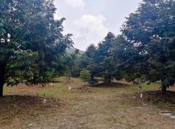 A60LR2011015 ขายที่ดิน คมบาง จันทบุรี 7-2-0.0 ไร่ 15.45 ล้าน